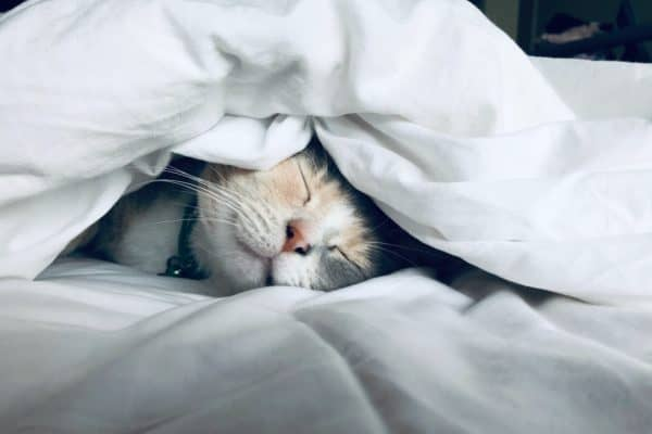 Why your wellbeing initiative needs to include sleep